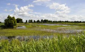 Photo courtesy of USDA NRCS.